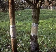 Προστασία δένδρων